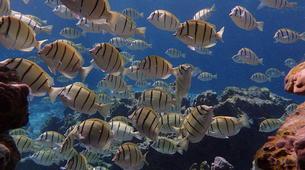 Snorkeling-Bora Bora-Snorkeling sur l'île de Bora Bora-5