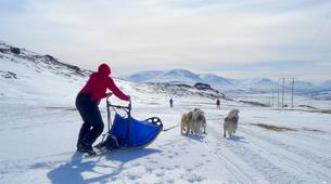 Dog sledding-Akureyri-Dog sledding excursion in Akureyri-4