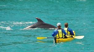 Sea Kayaking-Abel Tasman National Park-Half Day Sea kayaking excursion to 'Split Apple' from Kaiteriteri-3