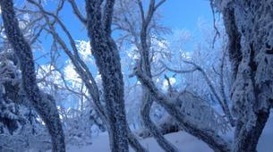 Snowshoeing-Bagenelles ski resort-Snowshoeing excursion in Grand Brezouard, Vosges-6