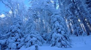 Snowshoeing-Vosges-Night snowshoeing excursion to the Donon, Vosges-6