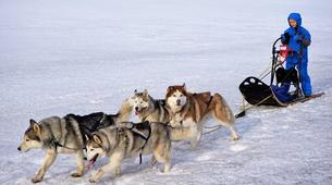 Dog sledding-Akureyri-Dog sledding excursion in Akureyri-1
