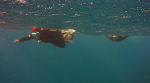 Snorkeling-Los Cristianos, Tenerife-Snorkeling excursion near Los Cristianos, Tenerife-8