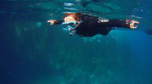 Snorkeling-Los Cristianos, Tenerife-Snorkeling excursion near Los Cristianos, Tenerife-4