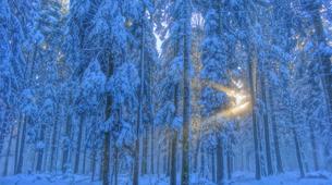 Snowshoeing-Vosges-Night snowshoeing excursion to the Donon, Vosges-2