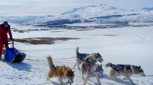 Dog sledding-Akureyri-Dog sledding excursion in Akureyri-8