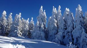 Snowshoeing-Bagenelles ski resort-Snowshoeing excursion in Grand Brezouard, Vosges-3