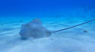 Snorkeling-Bora Bora-Snorkeling sur l'île de Bora Bora-3