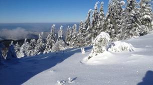 Snowshoeing-Bagenelles ski resort-Snowshoeing excursion in Grand Brezouard, Vosges-5