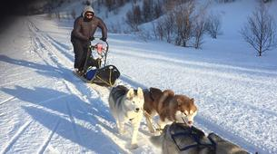 Dog sledding-Akureyri-Dog sledding excursion in Akureyri-5