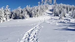 Snowshoeing-Bagenelles ski resort-Snowshoeing excursion in Grand Brezouard, Vosges-4