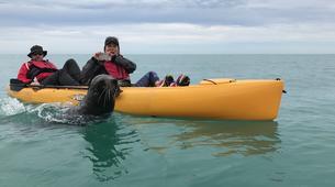 Kayak de mer-Kaikoura-Pedal kayaking excursions in Kaikoura-6