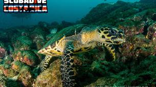 Scuba Diving-Las Catalinas-PADI Discover Scuba Diving in Las Catalinas-3