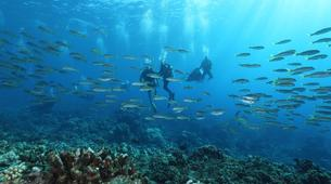 Scuba Diving-Tahiti-Adventure dives in Tahiti-5