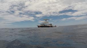 Scuba Diving-Las Catalinas-PADI Discover Scuba Diving in Las Catalinas-4