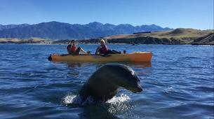 Kayak de mer-Kaikoura-Pedal kayaking excursions in Kaikoura-3