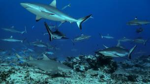 Scuba Diving-Tahiti-Adventure dives in Tahiti-6
