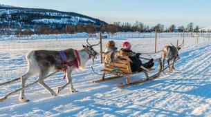 Reindeer sledding-Tromsø-Reindeer sledding excursions in Tromso-1