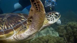 Scuba Diving-Sanur-Adventure dives in Tulamben, Bali-1