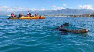 Kayak de mer-Kaikoura-Pedal kayaking excursions in Kaikoura-1