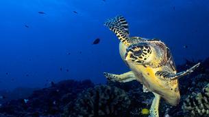 Scuba Diving-Tahiti-Adventure dives in Tahiti-2