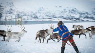 Reindeer sledding-Tromsø-Reindeer sledding excursions in Tromso-5