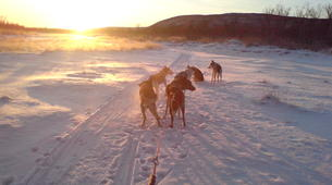 Dog sledding-Finnmark-Dog sledding excursions in Tana, Finnmark-1