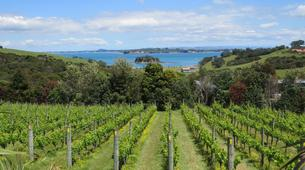 Helicopter tours-Auckland-Scenic Helicopter Flight with Waiheke Drop-Off-3
