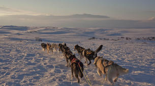 Dog sledding-Finnmark-Dog sledding excursions in Tana, Finnmark-2