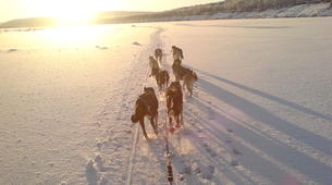 Dog sledding-Finnmark-Dog sledding excursions in Tana, Finnmark-6