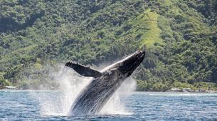 Wildlife Experiences-Tahiti-Whale watching excursion in Tahiti-1