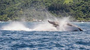 Wildlife Experiences-Tahiti-Whale watching excursion in Tahiti-5