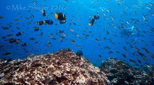 Scuba Diving-Tamarindo-Diving with bull sharks at Islas Murcielago from Tamarindo-2
