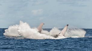 Wildlife Experiences-Tahiti-Whale watching excursion in Tahiti-7