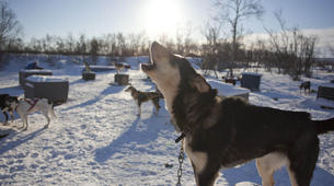 Dog sledding-Finnmark-Dog sledding excursions in Tana, Finnmark-3