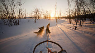 Dog sledding-Finnmark-Dog sledding excursions in Tana, Finnmark-5