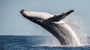 Wildlife Experiences-Tahiti-Whale watching excursion in Tahiti-3
