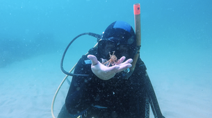 Scuba Diving-Sesimbra-Discover scuba diving course in Sesimbra-4