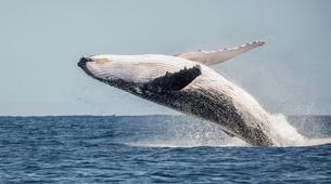 Wildlife Experiences-Tahiti-Whale watching excursion in Tahiti-6