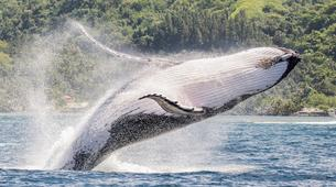Wildlife Experiences-Tahiti-Whale watching excursion in Tahiti-4