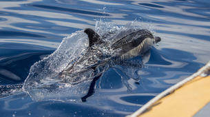 Wildlife Experiences-São Miguel-Whale Watching expedition & Islet round tour in Sao Miguel-3