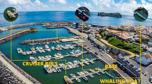 Wildlife Experiences-São Miguel-Whale Watching expedition & Islet round tour in Sao Miguel-2