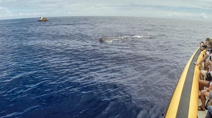 Wildlife Experiences-São Miguel-Whale Watching expedition & Islet round tour in Sao Miguel-4