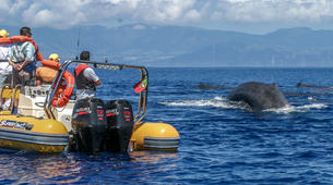 Wildlife Experiences-São Miguel-Whale Watching expedition & Islet round tour in Sao Miguel-1