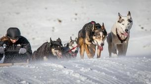 Dog sledding-Wanaka-Drive your own team of sled dogs in the Southern Alps-1