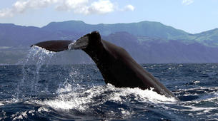 Wildlife Experiences-São Miguel-Whale Watching expedition & Islet round tour in Sao Miguel-6