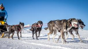Dog sledding-Wanaka-Drive your own team of sled dogs in the Southern Alps-3