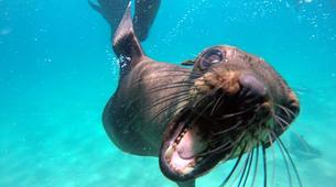 Snorkeling-Plettenberg Bay-Swimming with seals in Robberg Nature Reserve-7