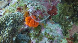Plongée sous-marine-Grand Baie-Baptême de plongée à Grand Baie, au Nord de l'ïle Maurice-6