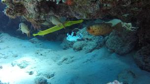 Plongée sous-marine-Grand Baie-Plongée Exploration à Grand Baie, Maurice-10